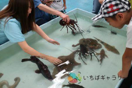 お魚ふれあい体験1のフリー素材(市場の写真)