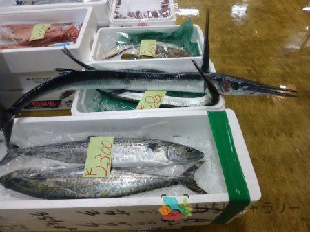 サワラ・魚のフリー素材(市場の写真)