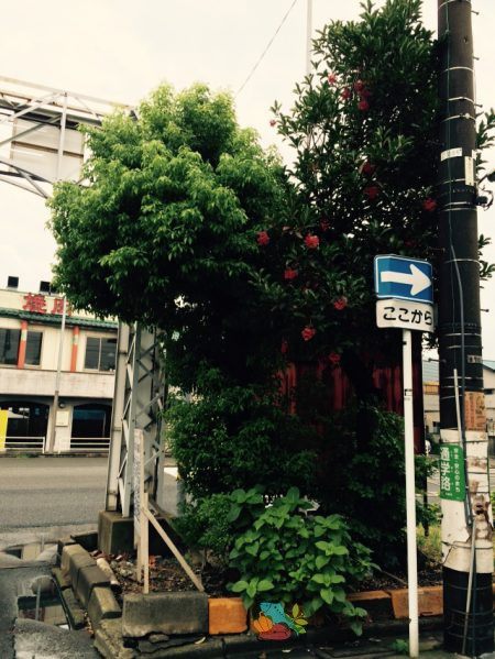 正門横の木のフリー素材(市場の写真)