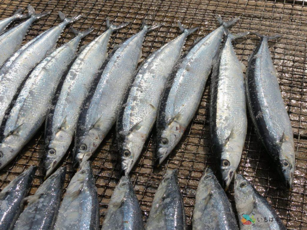 秋刀魚1のフリー素材(市場の写真)