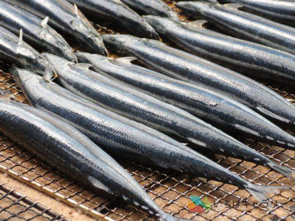 秋刀魚2のフリー素材(市場の写真)