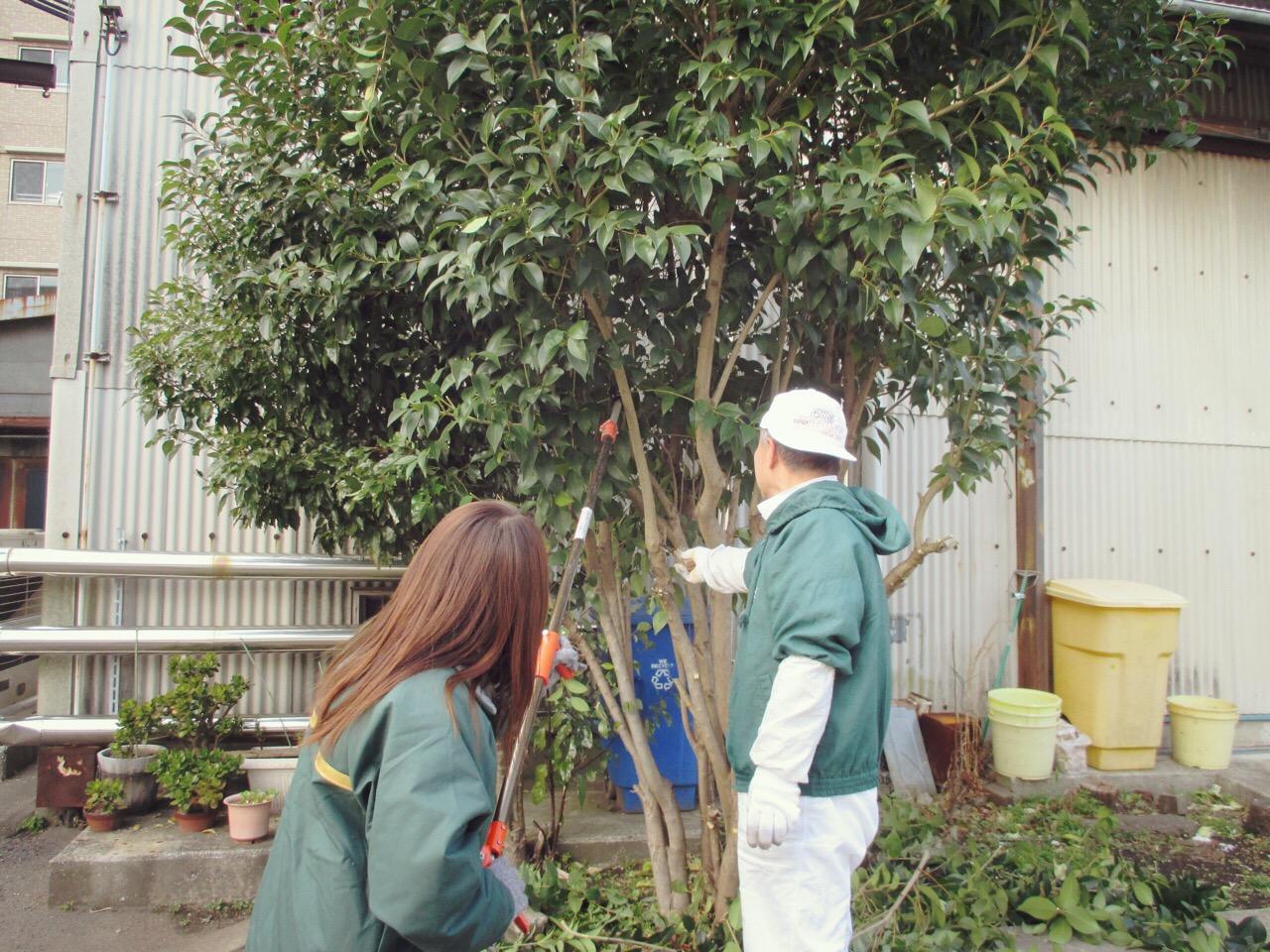 川崎市地方卸売市場南部市場木の伐採