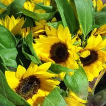 川崎市地方卸売市場南部市場花卉