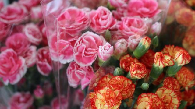 川崎市地方卸売市場 南部市場 花卉業者 川崎花卉園芸