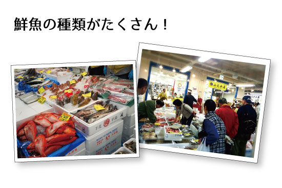 鮮魚の種類がたくさん!山定水産