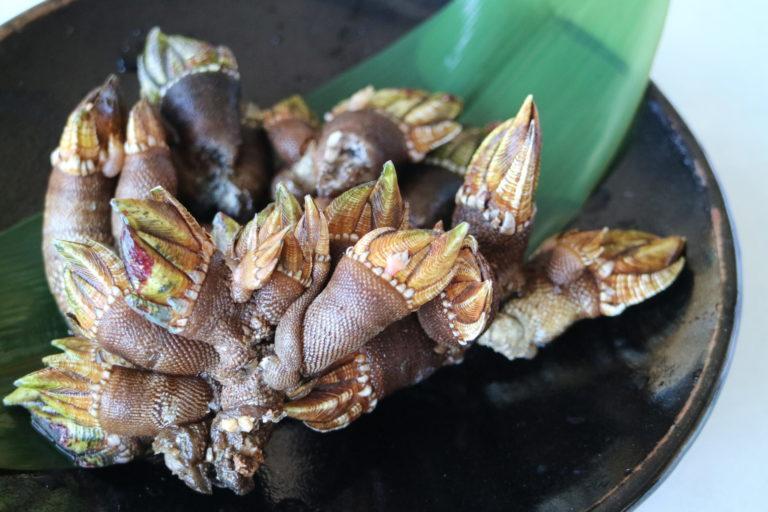 ブログを更新しました!「グロテスクだけどとっても美味い!?亀の手を食べてみた!